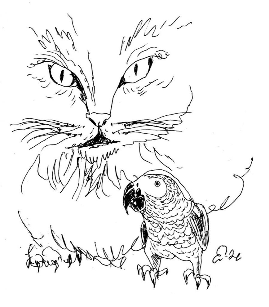 Drawing of cat leering at parrot